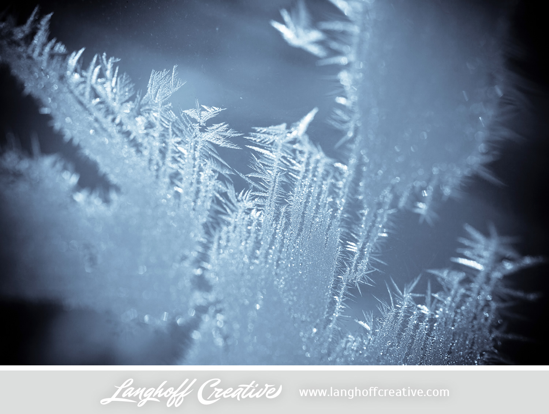 LanghoffCreative-frost-macro-photography_Jan06-2014-photo-4.jpg