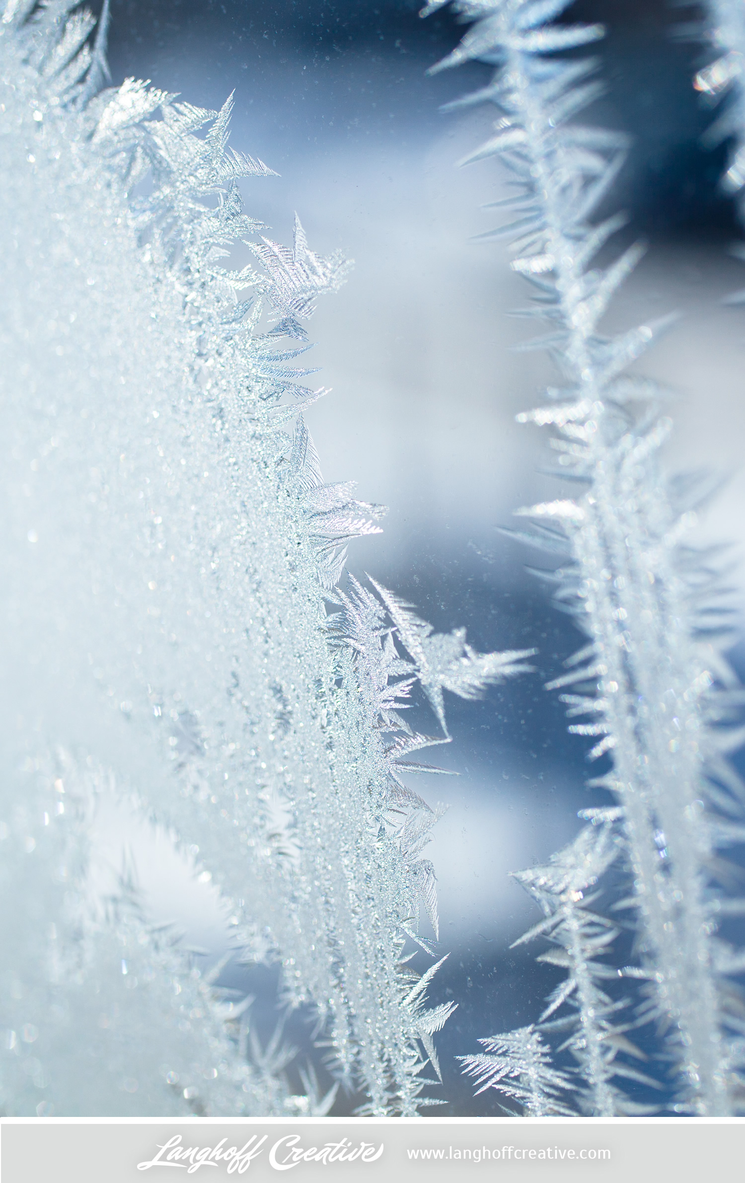 LanghoffCreative-frost-macro-photography_Jan06-2014-photo-2.jpg