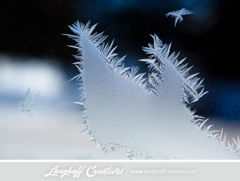 LanghoffCreative-frost-macro-photography_Jan06-2014-photo-5.jpg