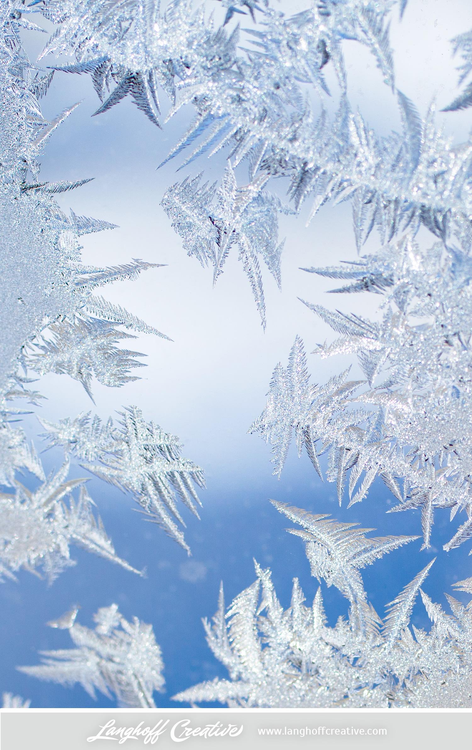 LanghoffCreative-frost-macro-photography_Jan06-2014-photo-11.jpg