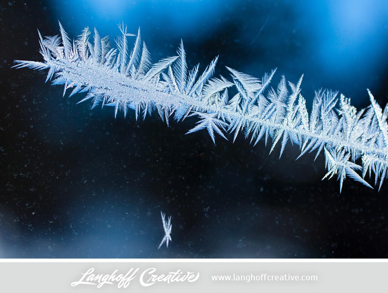 LanghoffCreative-frost-macro-photography_Jan06-2014-photo-13.jpg