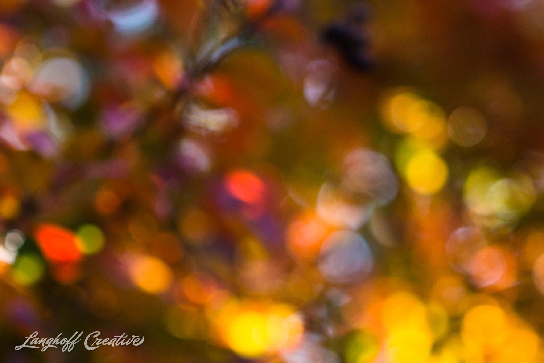 FallColors-FallMorning-LanghoffCreative-20141030-6-photo.jpg