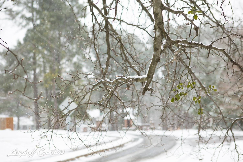 RaleighSnow-Winter-2015-RaleighPhotographer-LanghoffCreative-Snowday-AmberLanghoff-6-photo.jpg