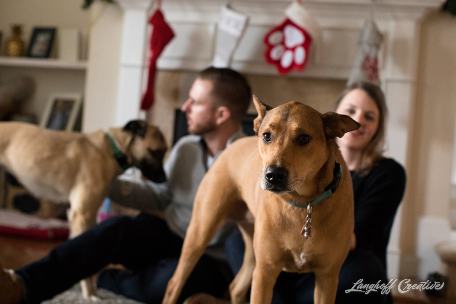 20171118-ByrdChristmas-Dogs-Holidays-LanghoffCreative-RealLifeSession-DocumentaryFamilyPhotography-RDUphotographer-15-photo.jpg