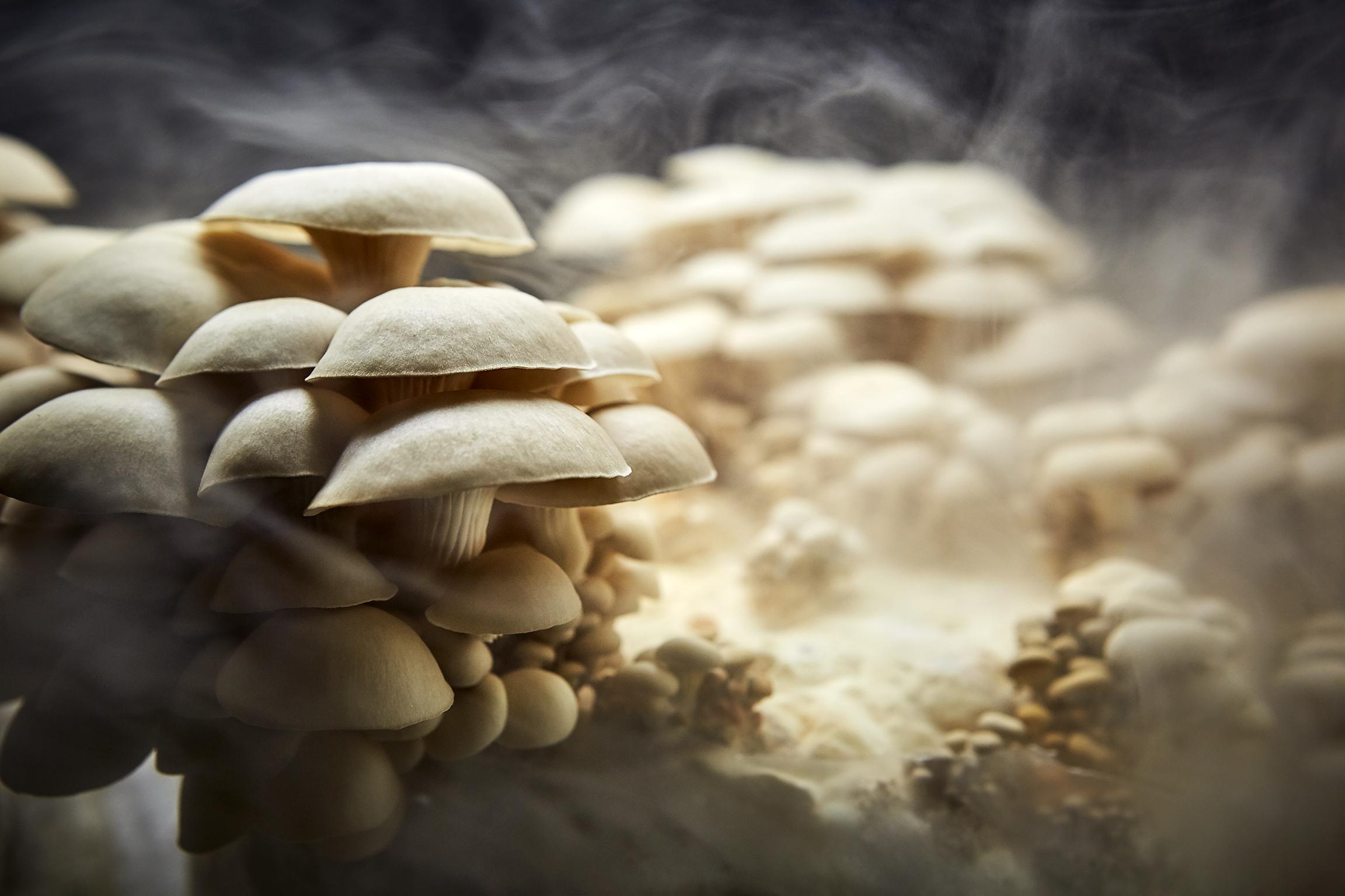 180507_SojournFare_MushroomCOMP.jpg