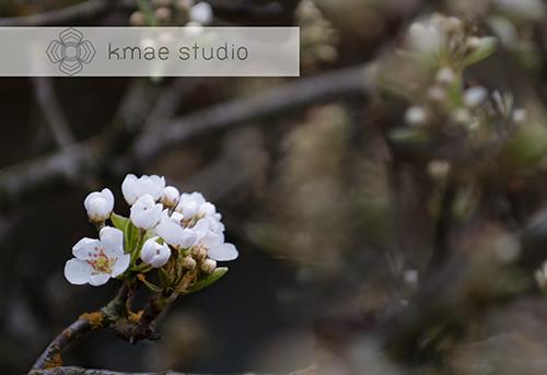 flower, bosc pear tree_k.me studio_kayak sareen