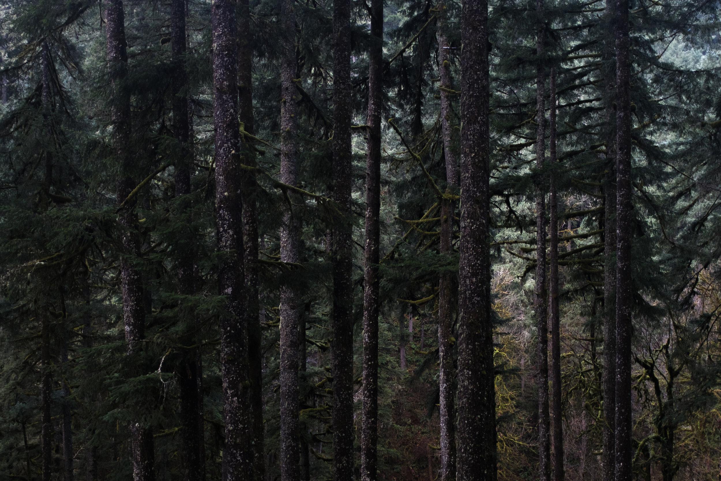 OREGON - Silver Falls State Park ///Portland Japanese Garden
