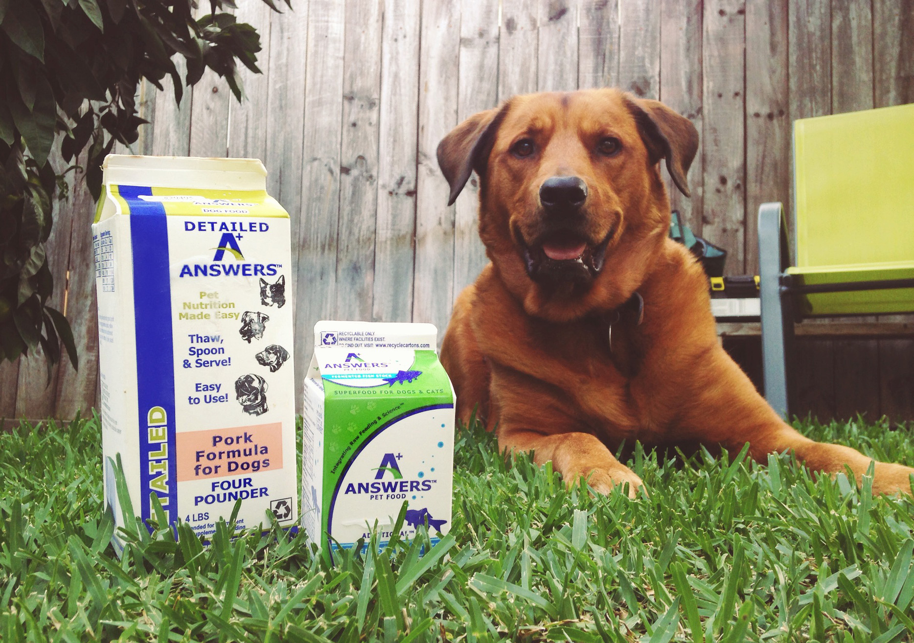 Our dog Kai loves his raw food diet from Answers Pet Food