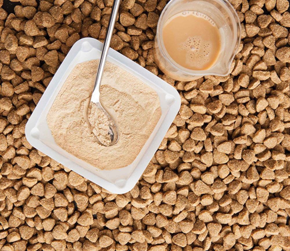 Chemicals and powders are added to traditional dog food kibble to make it smell like food.