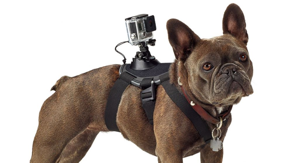 gopro_fetch_harness.jpg