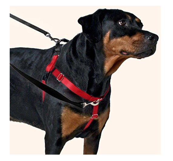 Freedom No-Pull Harness