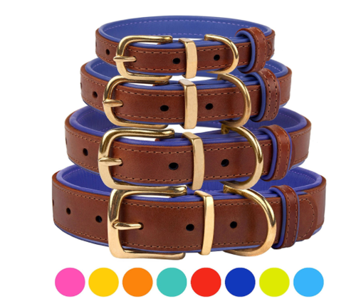 Padded Leather Buckle Collar