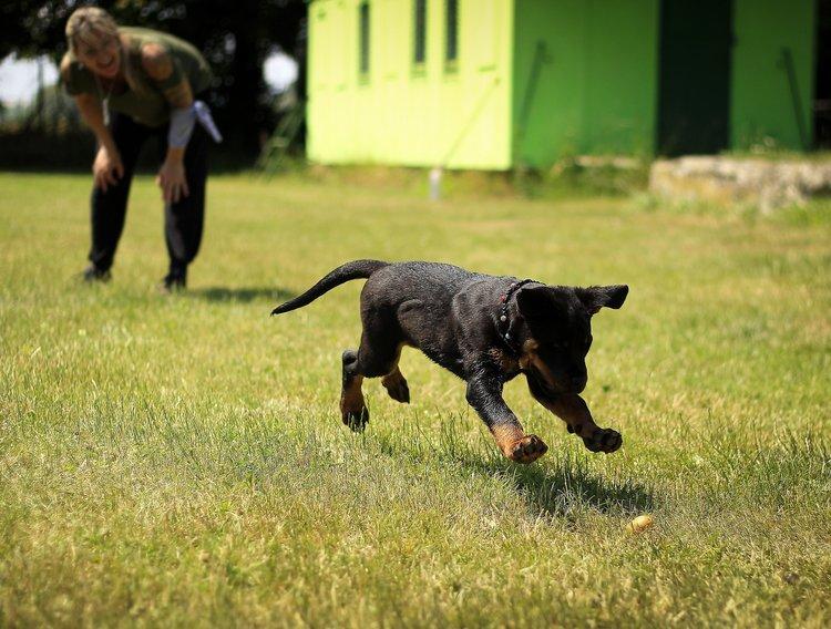 Puppy Playing Fetch