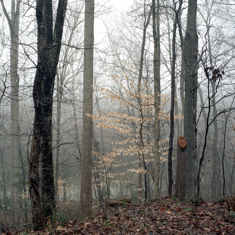 WoodsNC.jpg