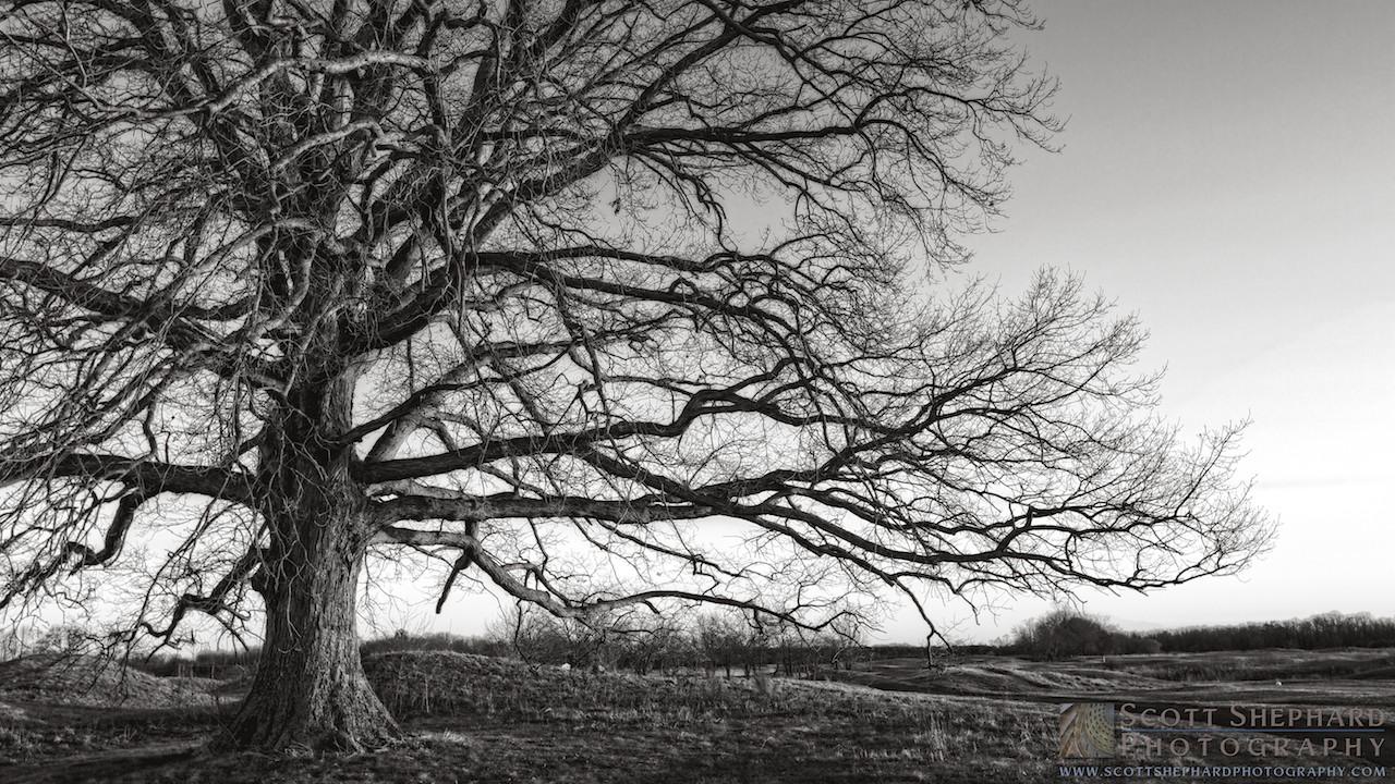 2014 04-23 Variations On a Tree by Watertown, South Dakota, photographer Scott Shephard
