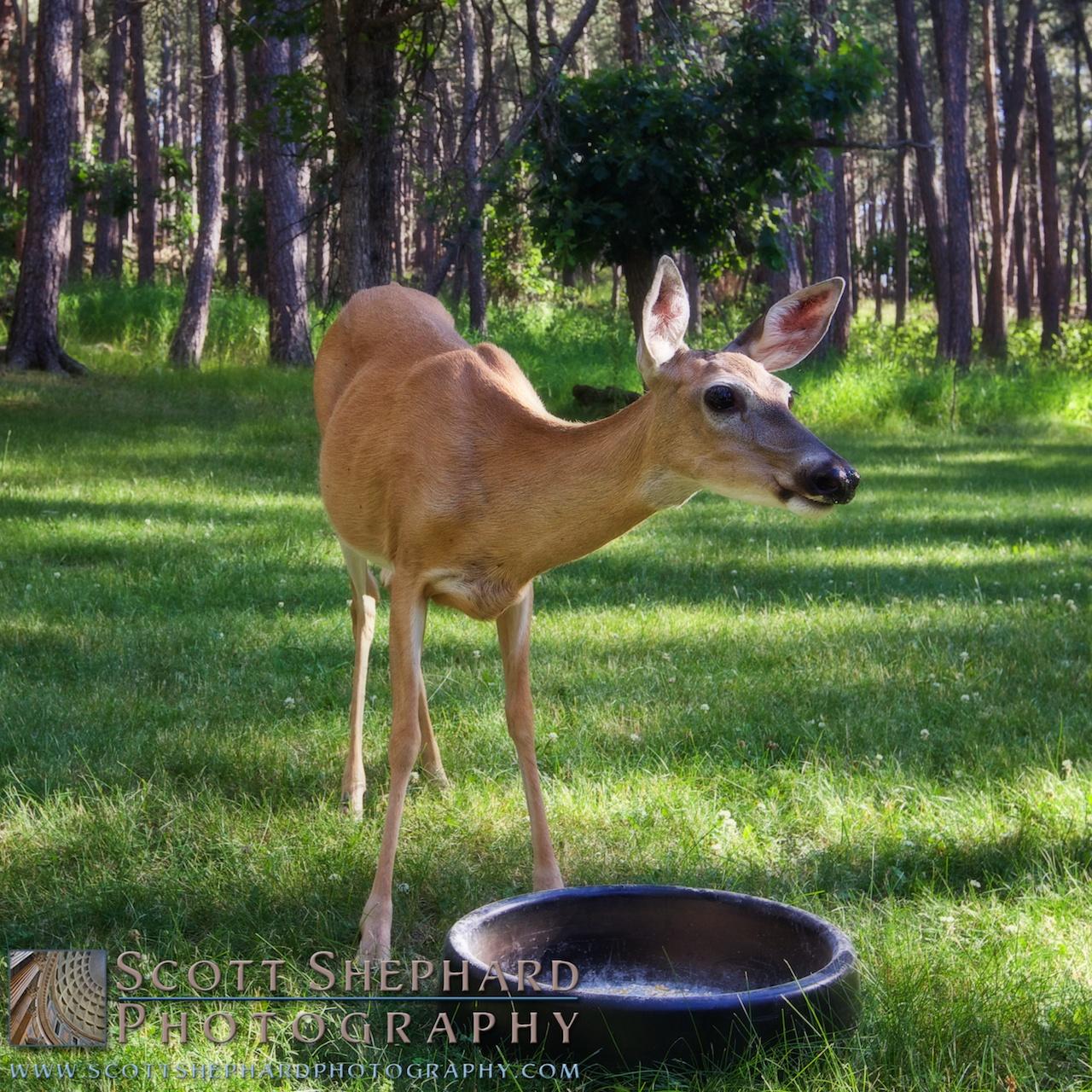 2014 07-22 Our Friend by Watertown, South Dakota, photographer Scott Shephard