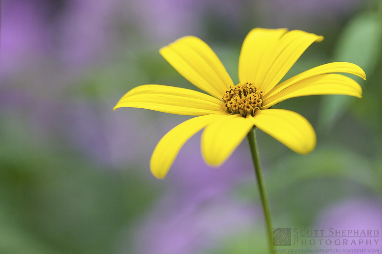 yellow flower.jpg