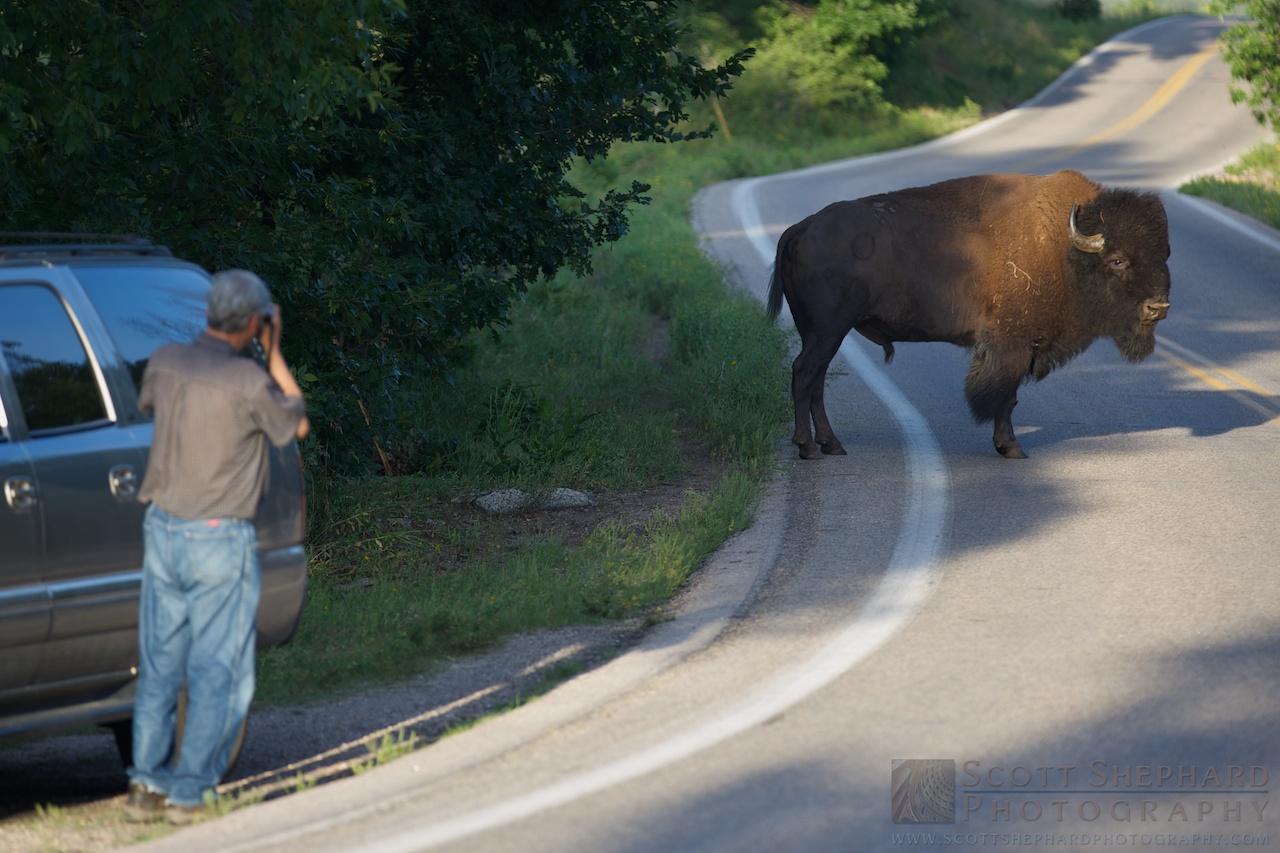 2014 08-20 Buffalo Are Dangerous?  by Watertown, SD, Photographer Scott Shephard