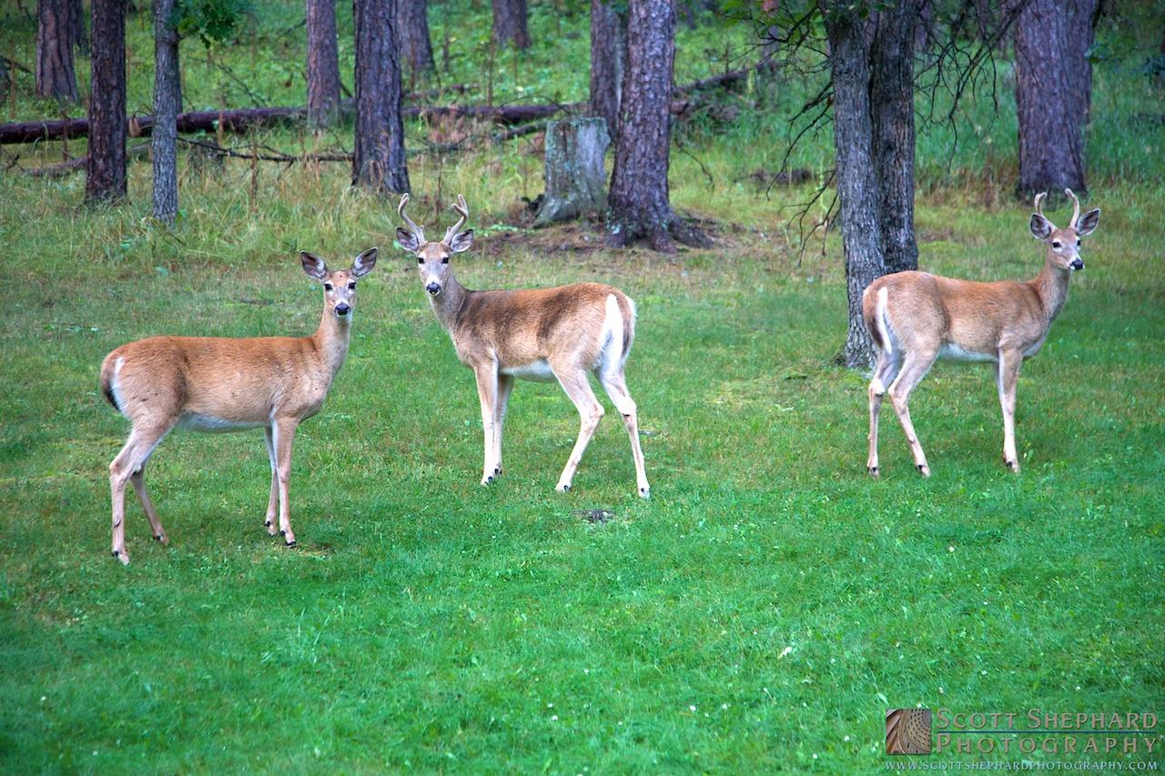 2014 08-23 Threesome by Watertown, South Dakota, photographer Scott Shephard