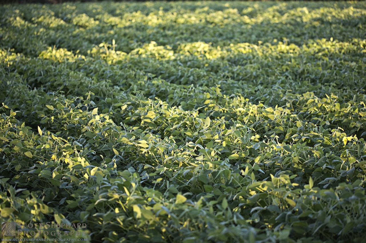 2014 09-09 Do You Know Beans? by Watertown, South Dakota, photographer Scott Shephard