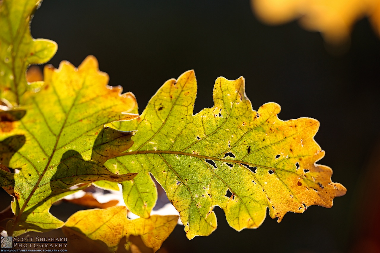 2014 09-21 Change of Seasons by Watertown, South Dakota, photographer Scott Shephard