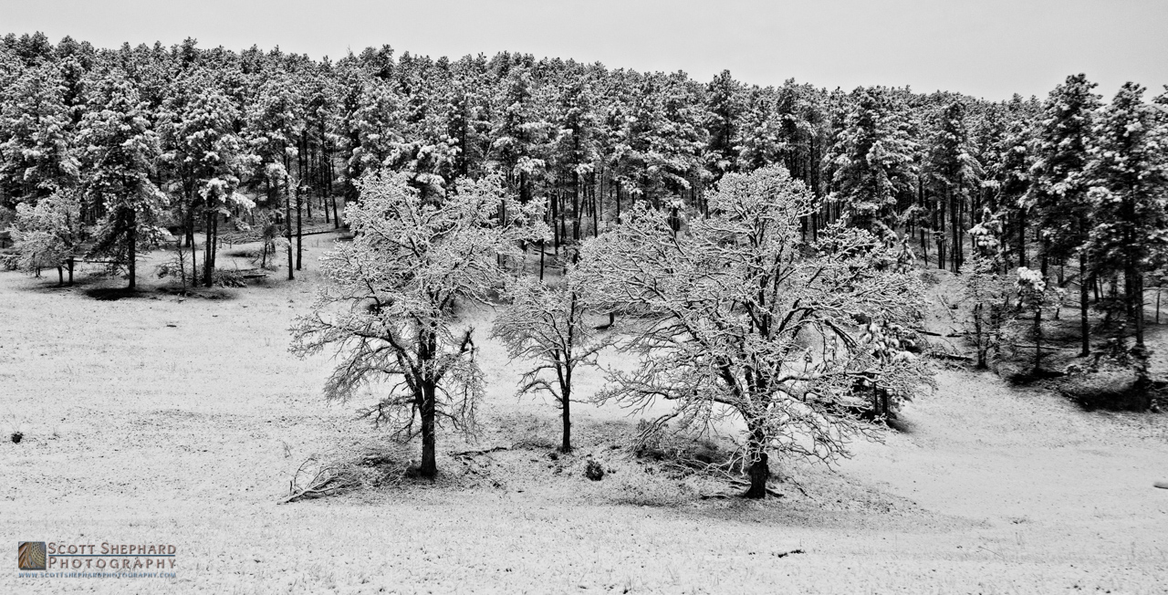 Black Hills Snow.jpg