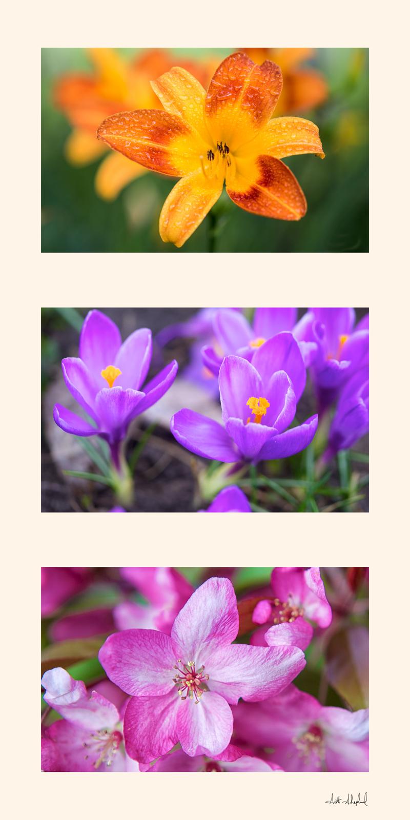 Flower Triptych.jpg