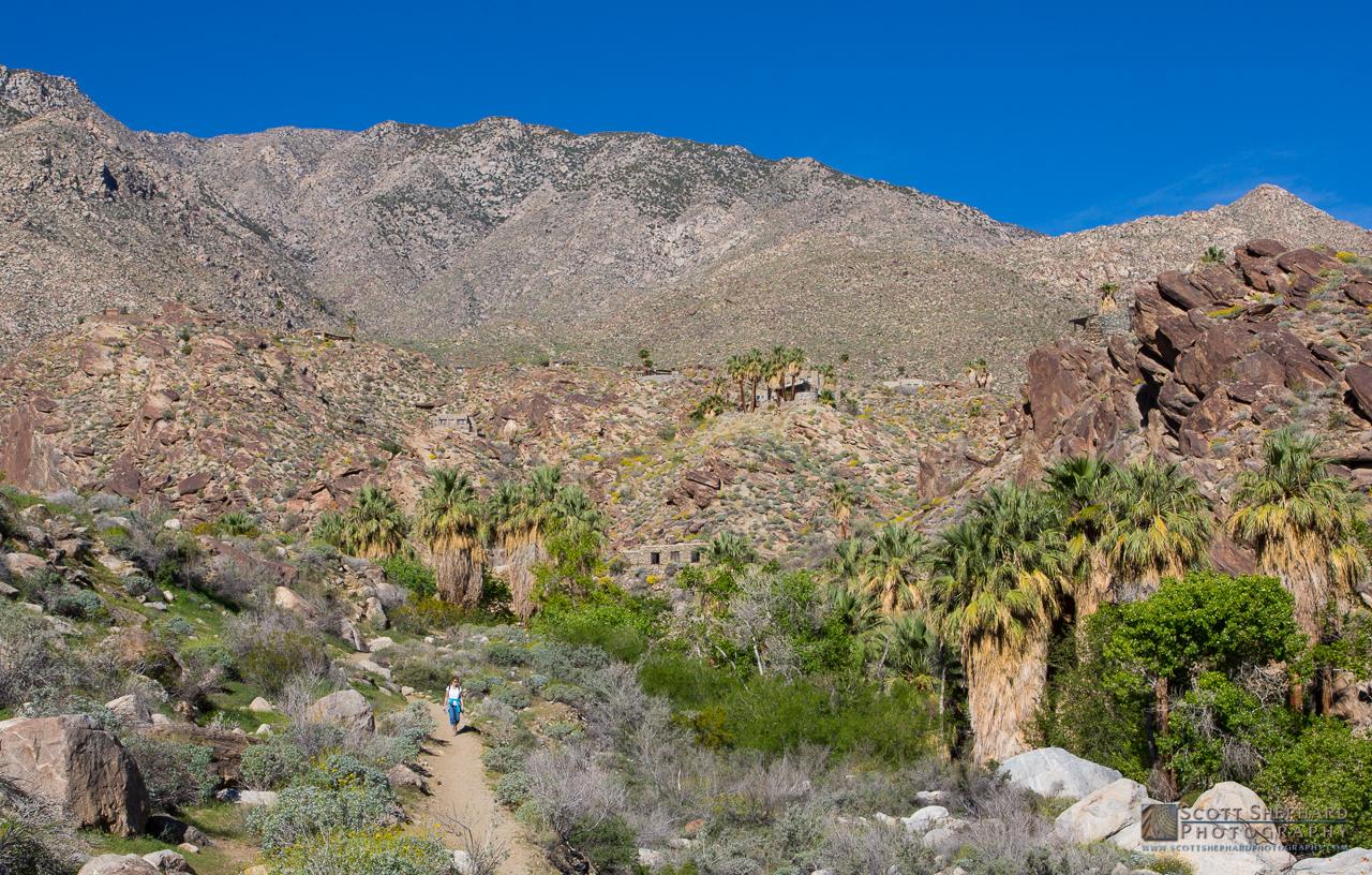 Indian Canyons, California.jpg