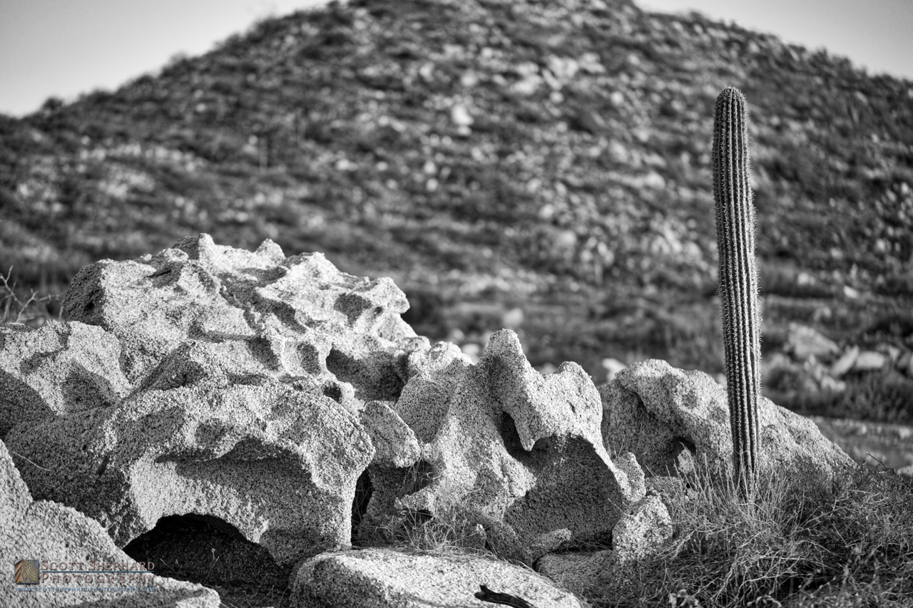 Single Tall Cactus - Baja Mexico.jpg