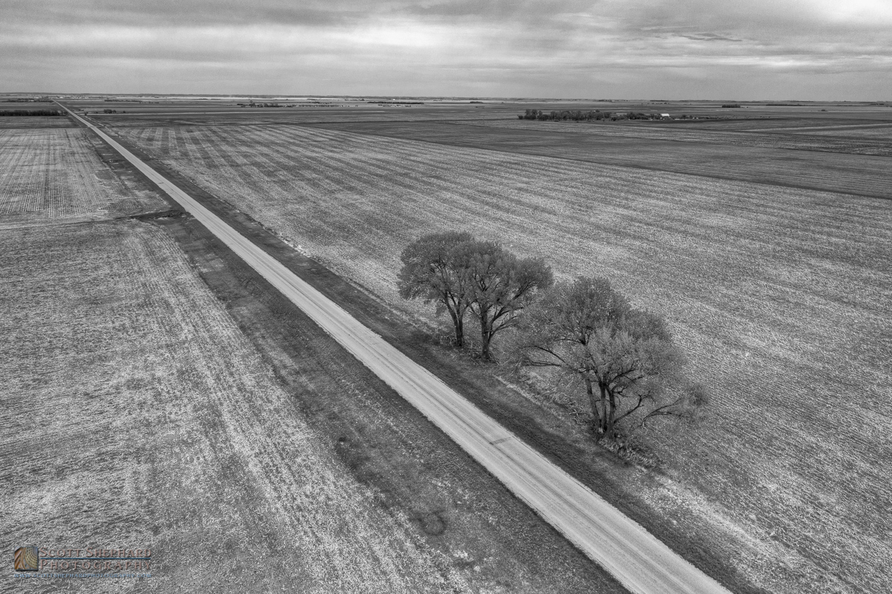 Trees on Country Road 12.jpg