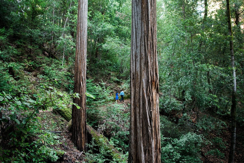 BIg Basin Redwoods State Park Engagement Session 011.jpg
