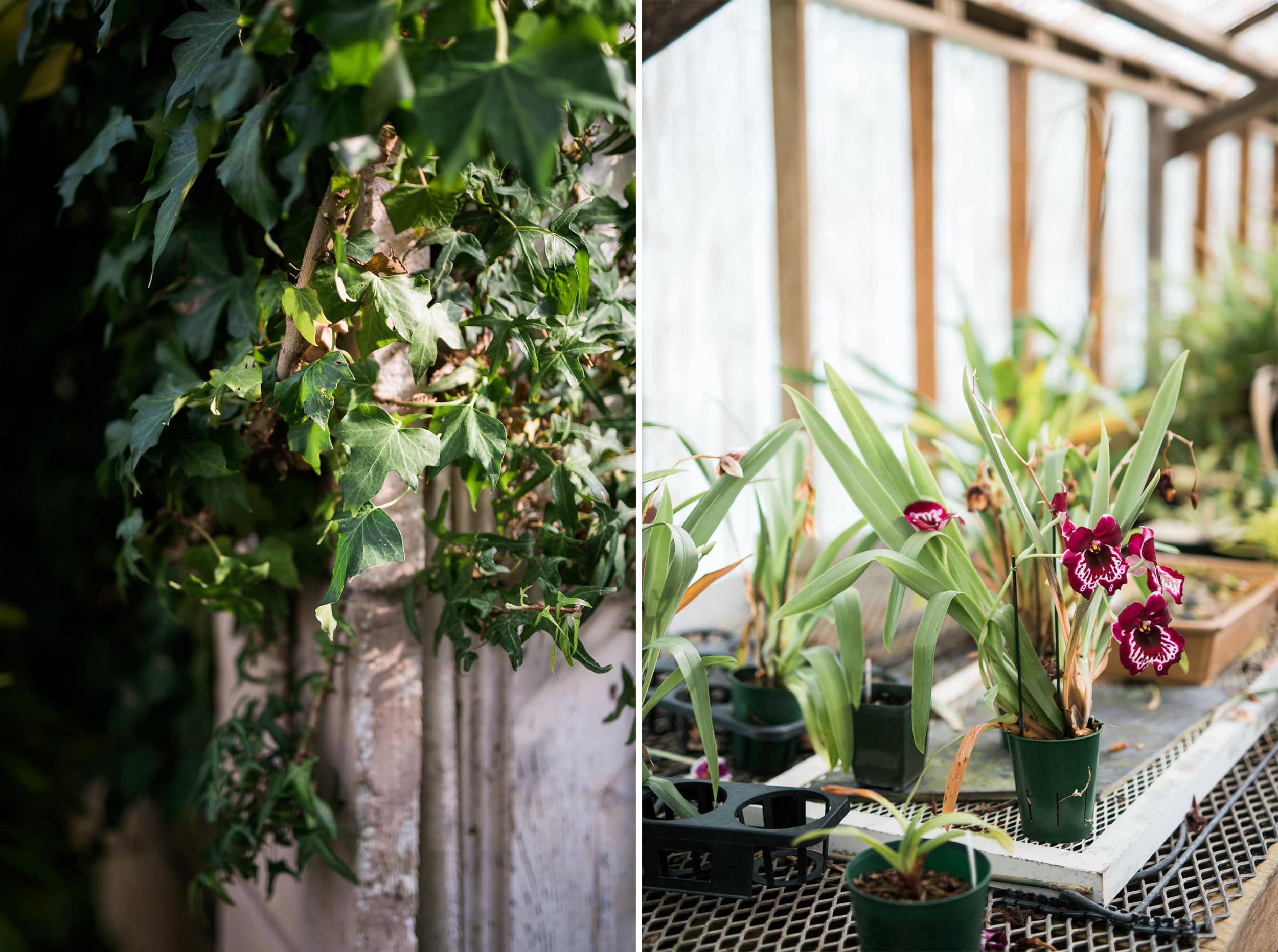 Shelldance Orchid Gardens Wedding 022.jpg