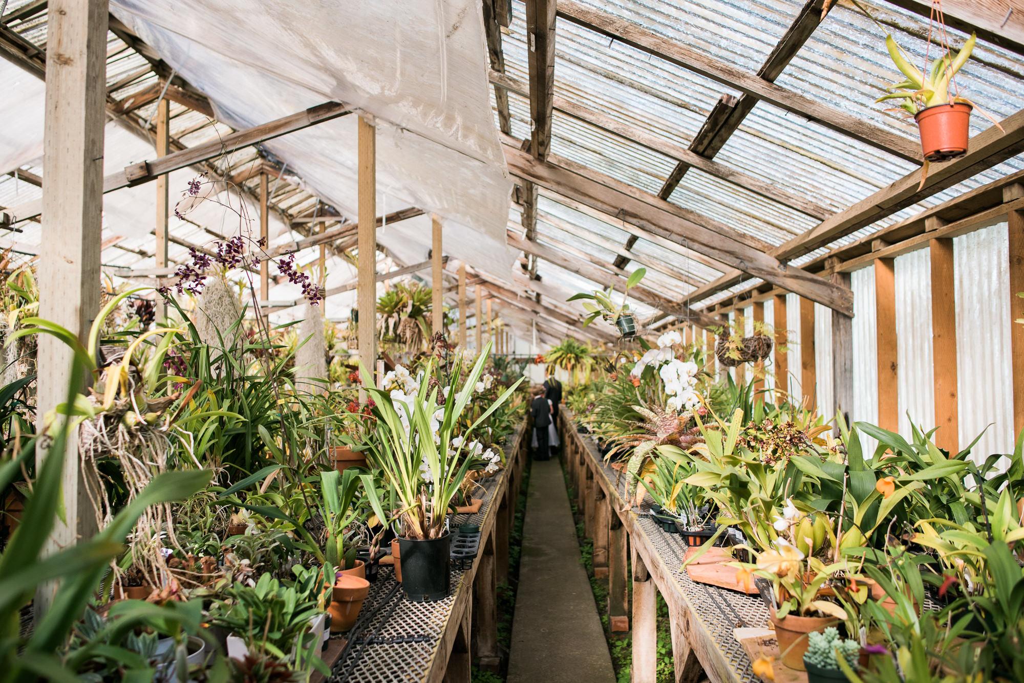 Shelldance Orchid Gardens Wedding 024.jpg