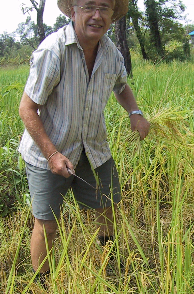 Rice harvest03.jpg