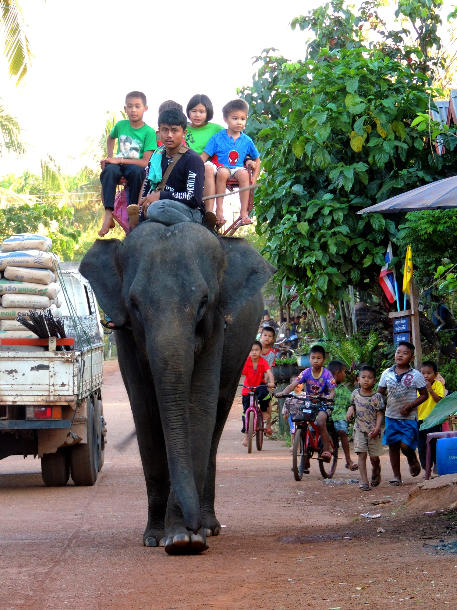 P0013 Elephants01.jpg