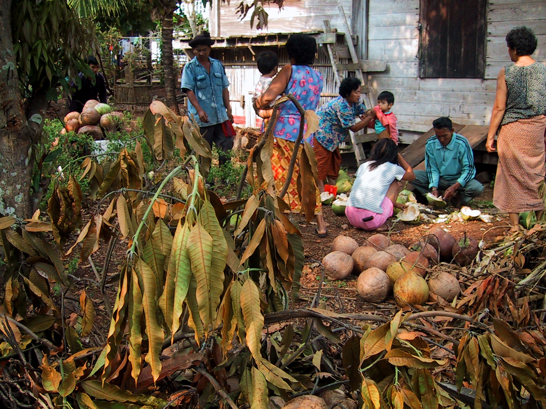 P0612 Coconut01.jpg