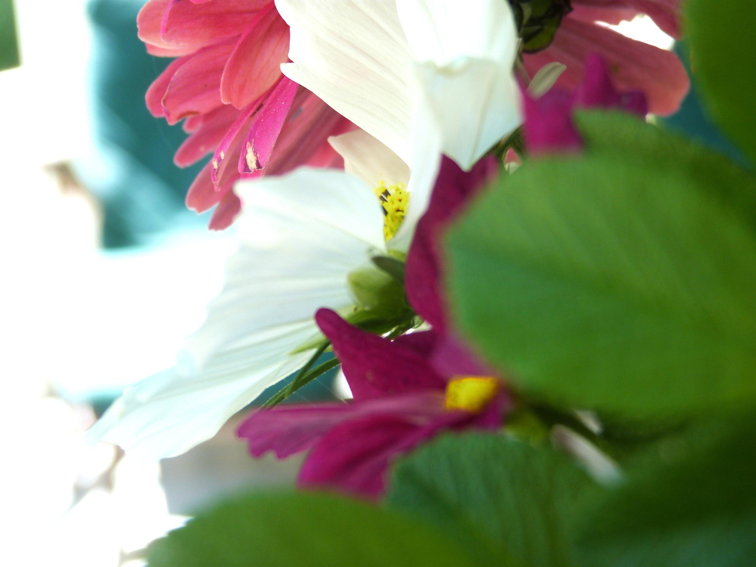 Porch Flowers_Peek.jpg