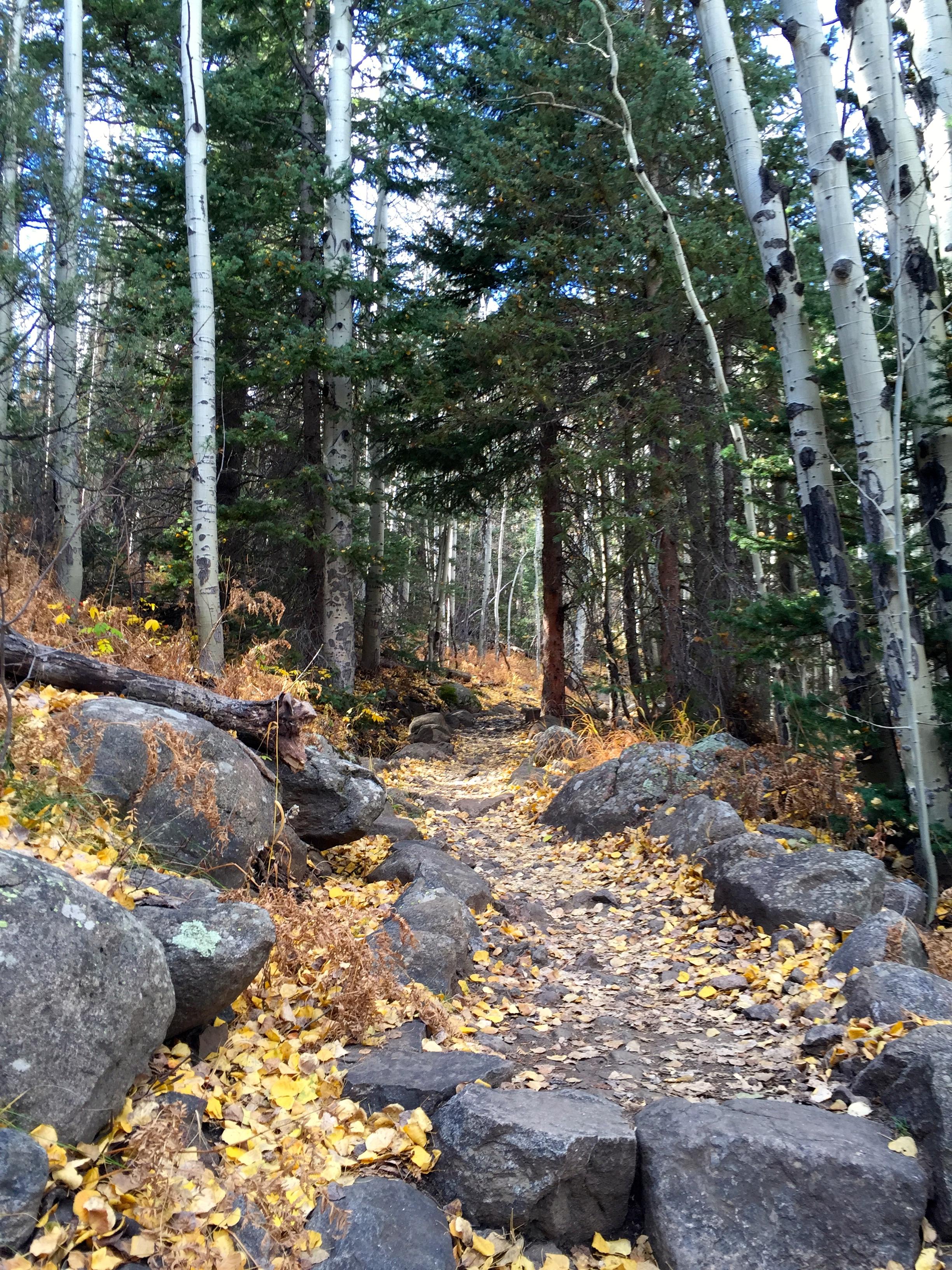 Climbing through aspen to Cub Lake
