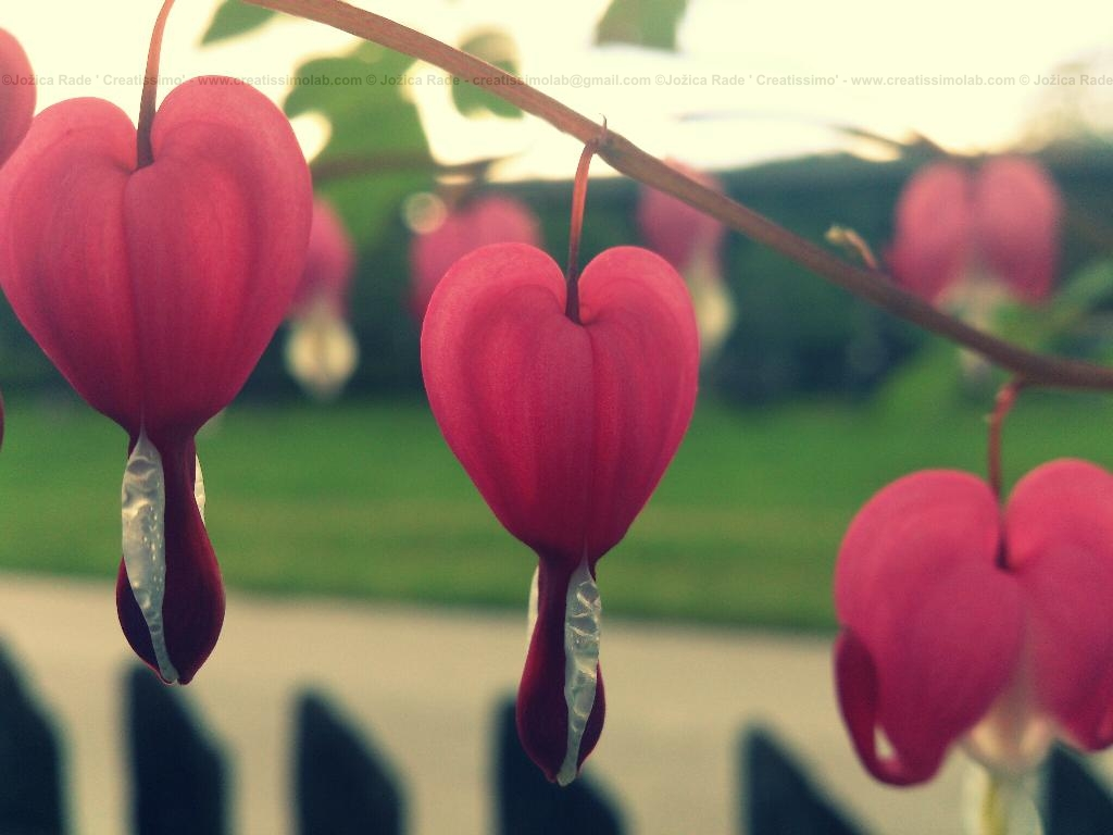 You can find heartful love everywhere if your heart is wide open...