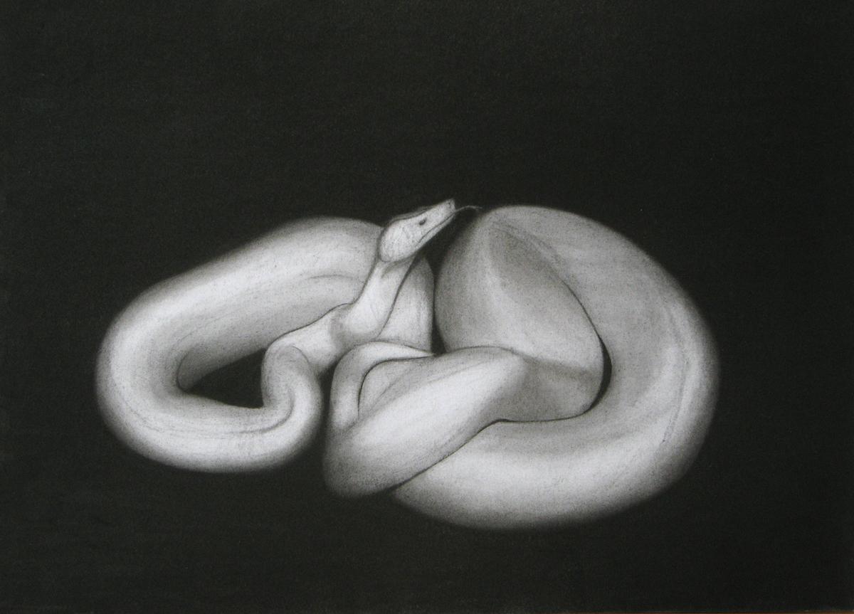 snakew.jpg