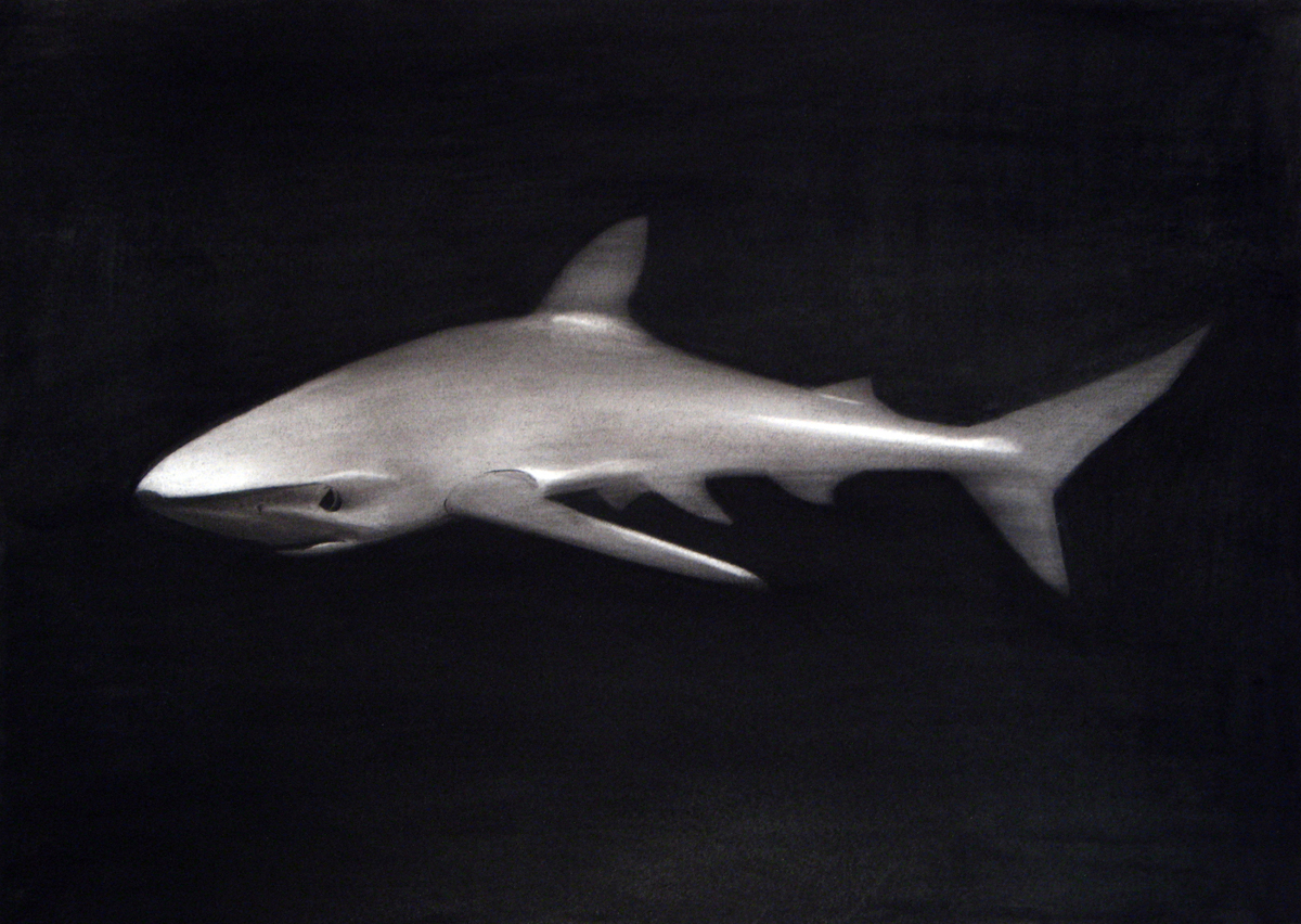 sharkw.jpg