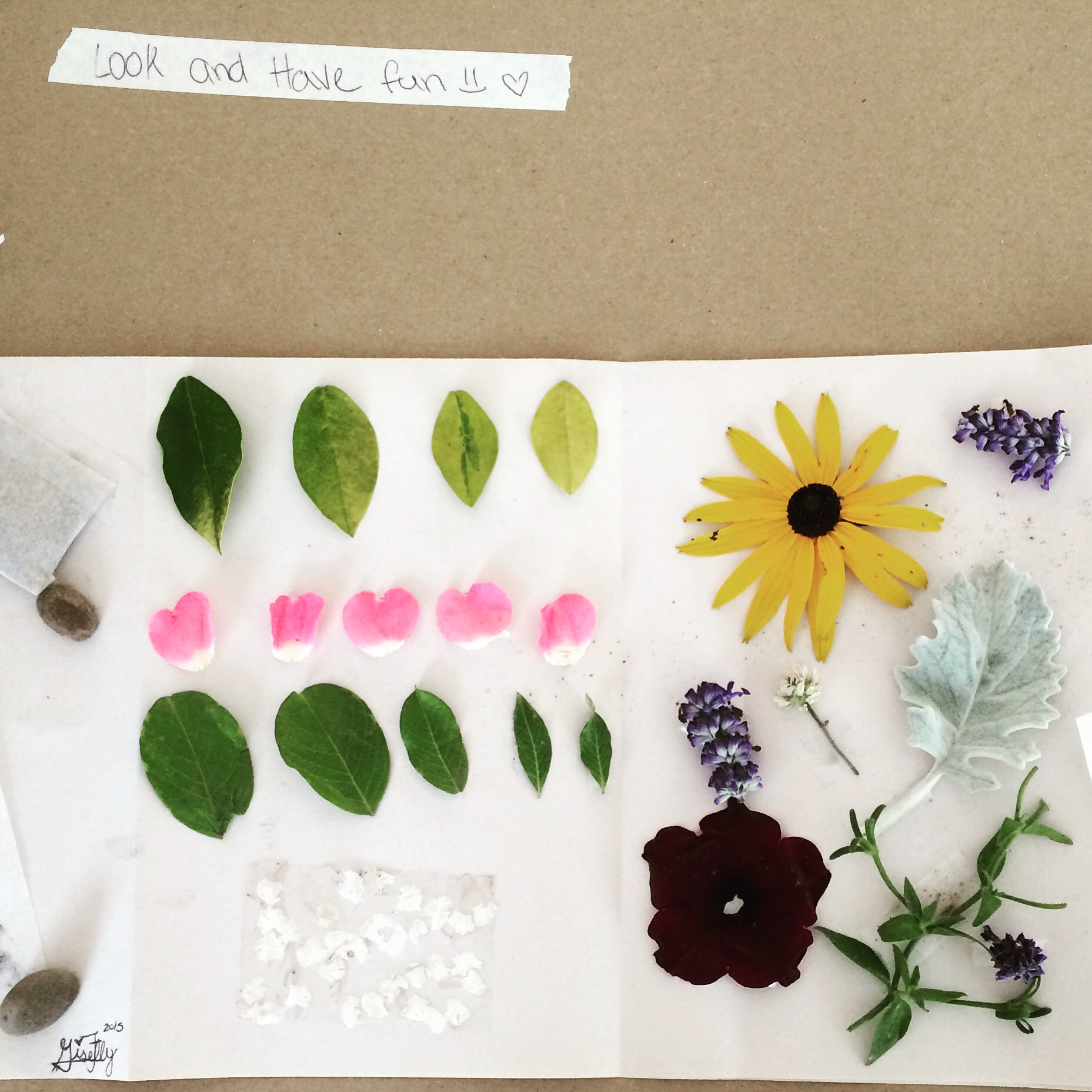 Nature-Collecting_Field-Journals_Giselly.JPG