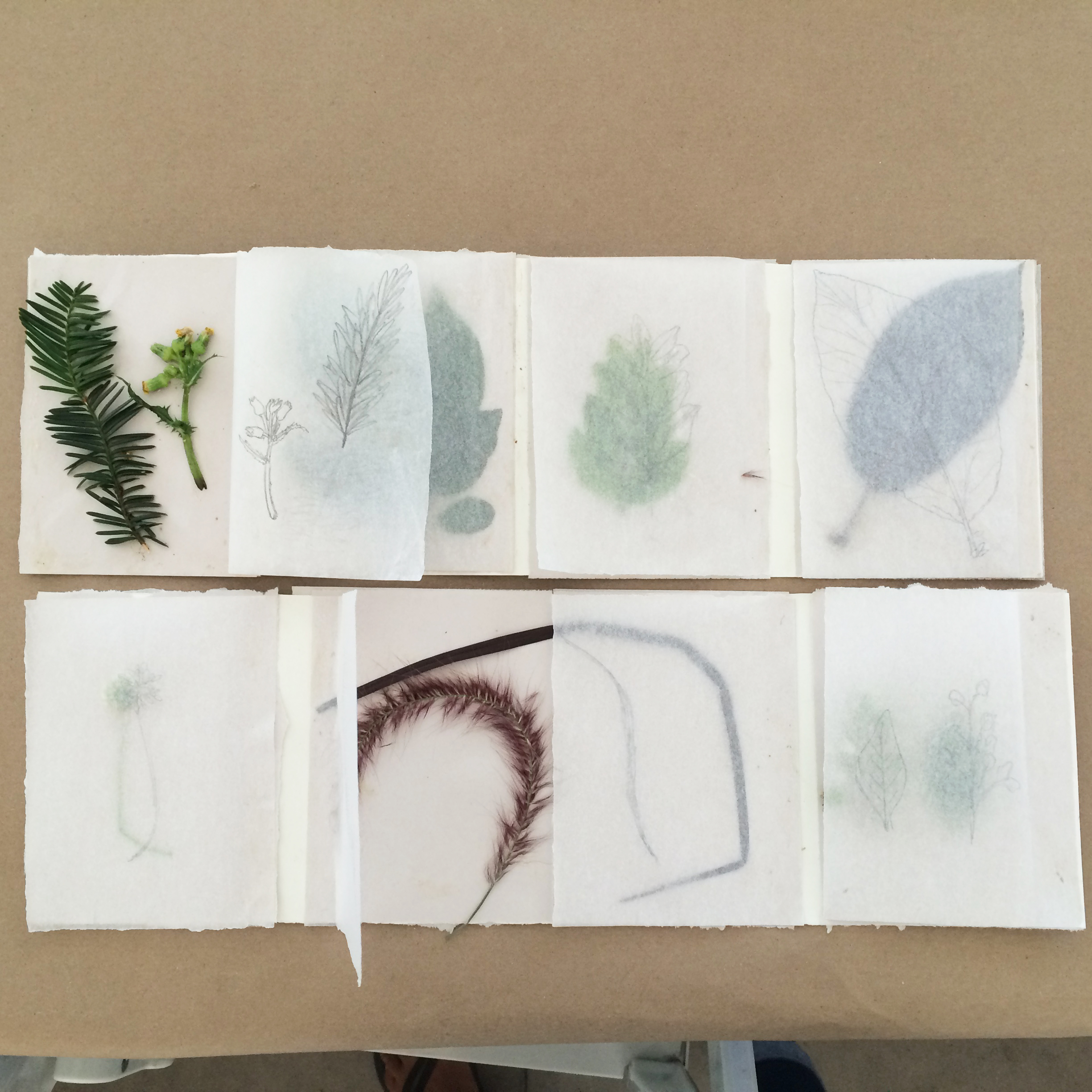 Nature-Collecting_Field-Journals_Samia_02.JPG