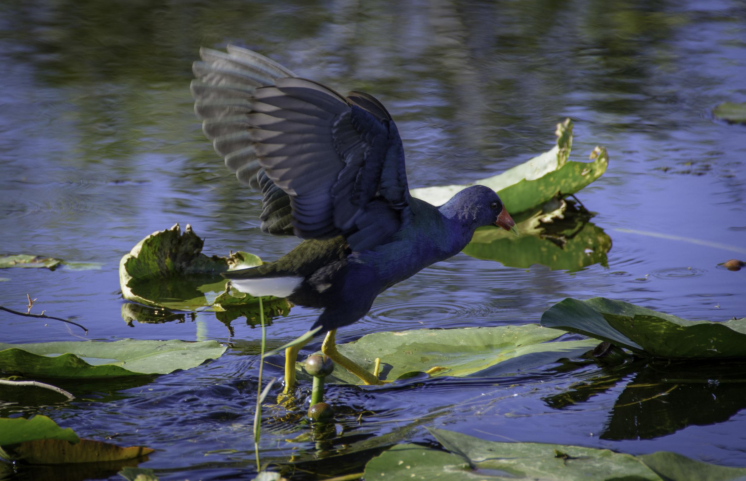 Everglades_20140217_013.jpg