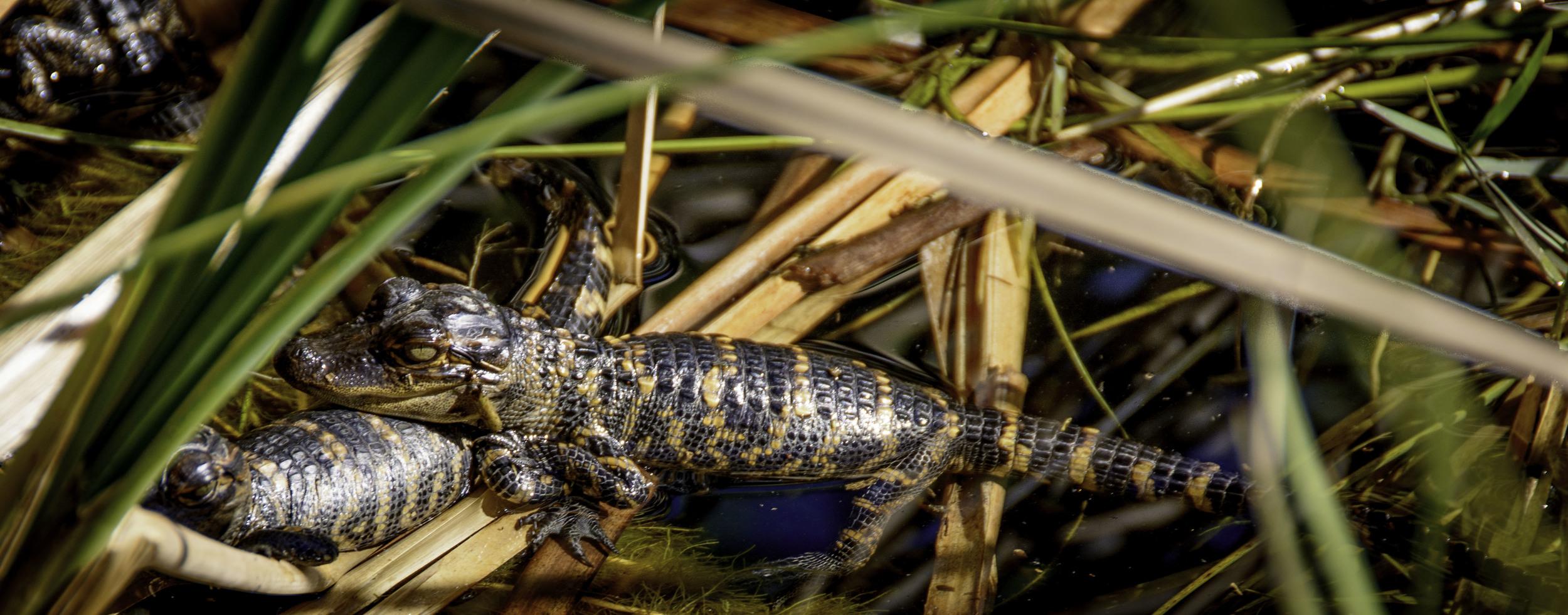 Everglades_20140217_064.jpg