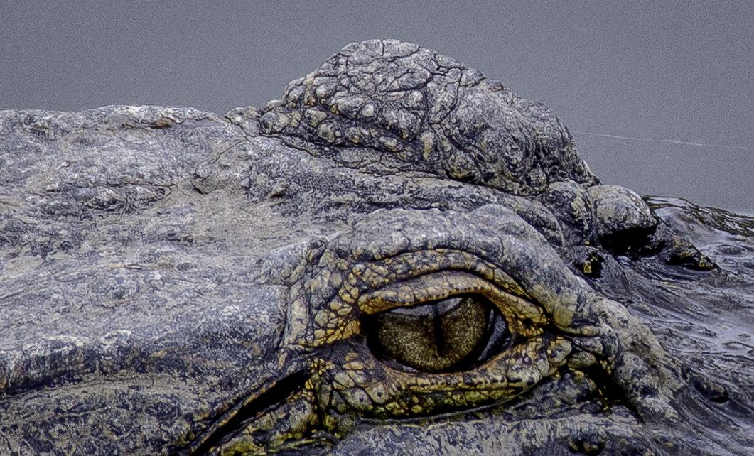 Gatorland_20140221_173.jpg
