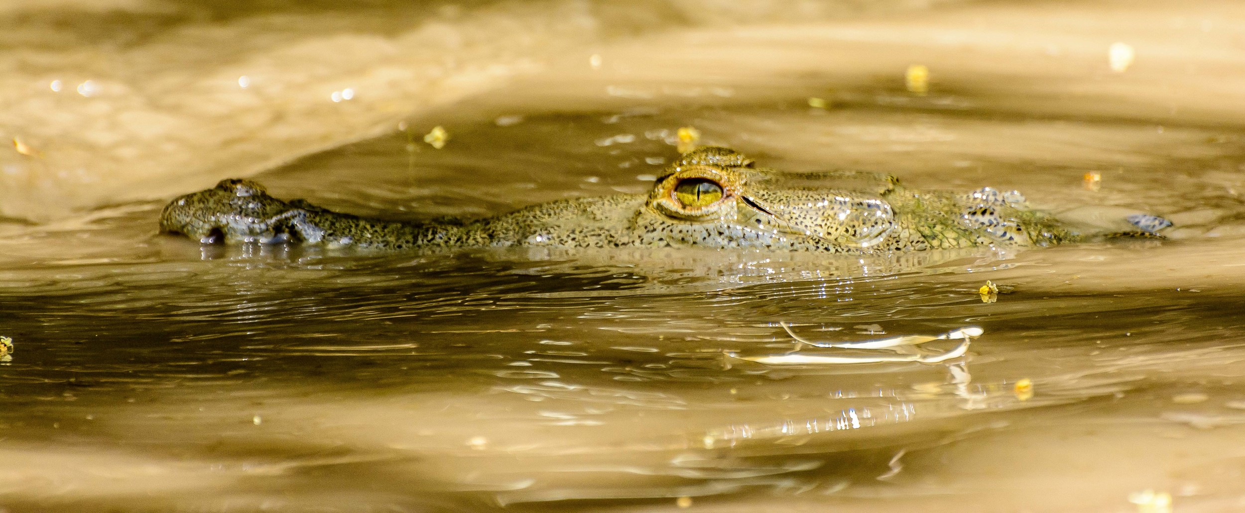 CostaRica Croc.jpg