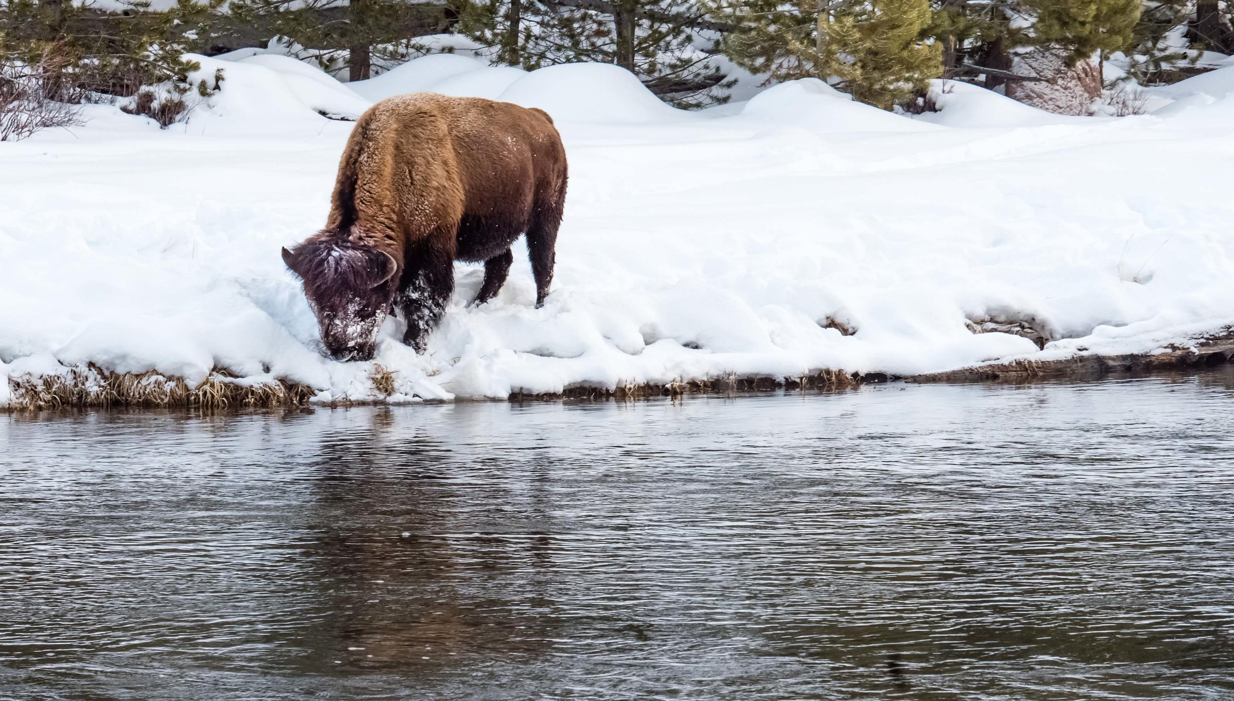 Montana-131.jpg