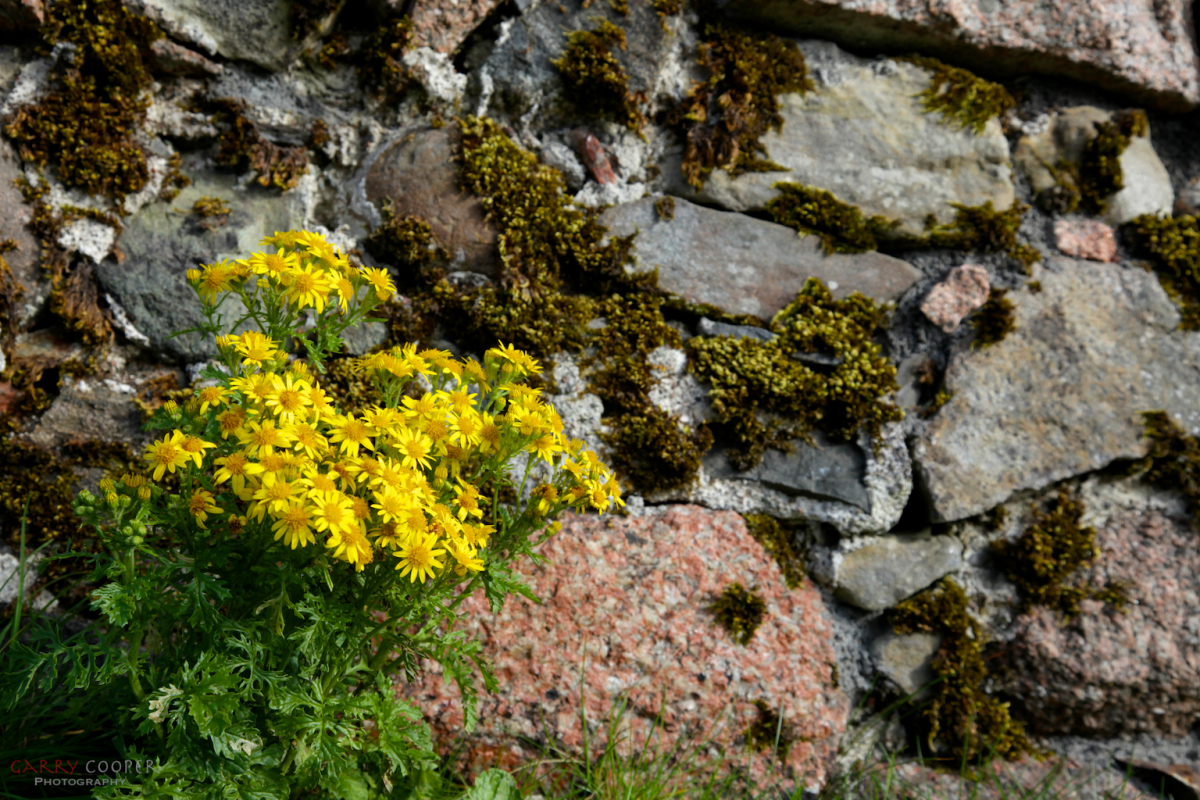 Walled Garden, Iona Abbey