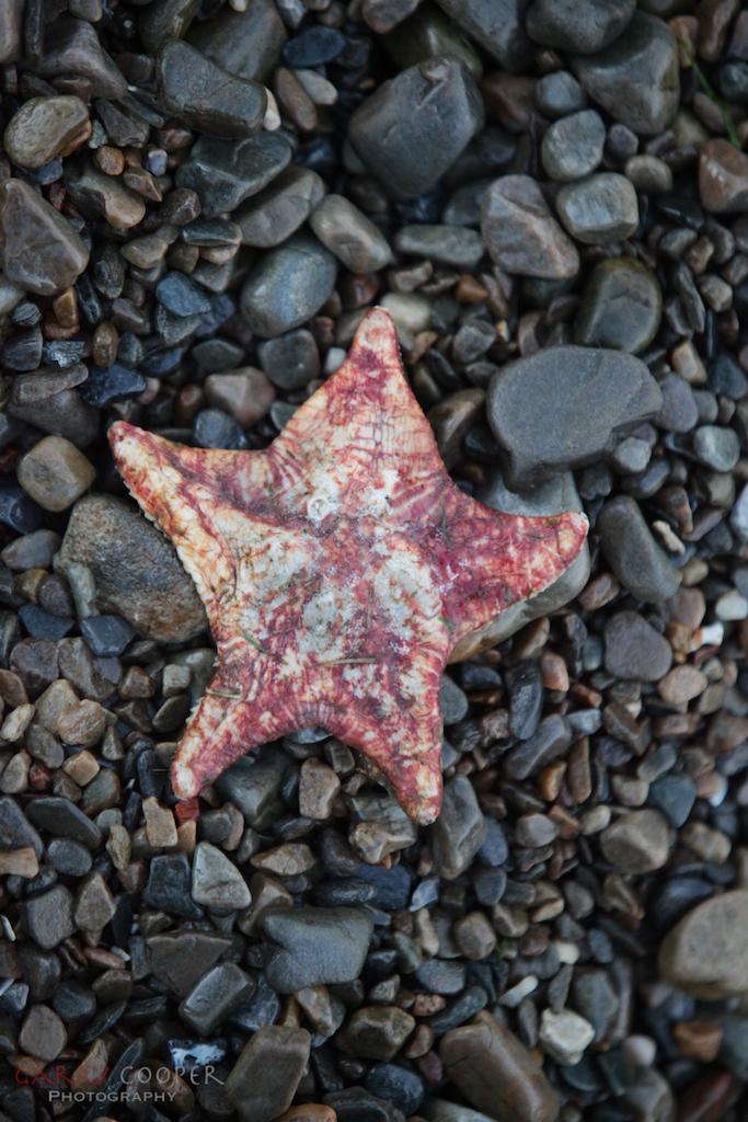 Starfish, Ullapool